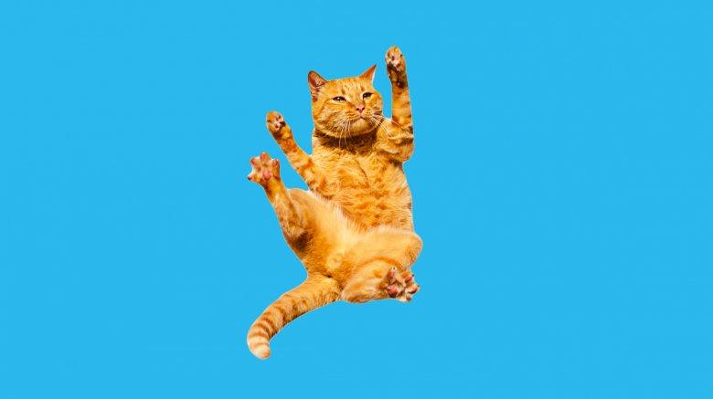 Falling cat