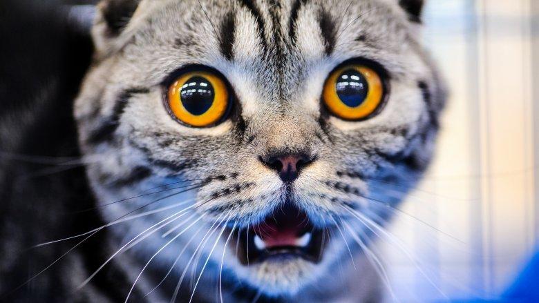 Cat, Scared, Cucumber
