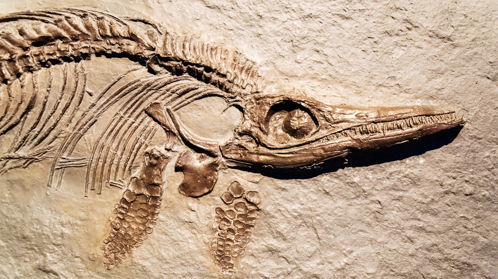 Fossil of an Ichthyosaurus