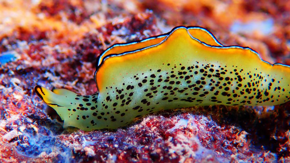 A sea slug like this grows a new body