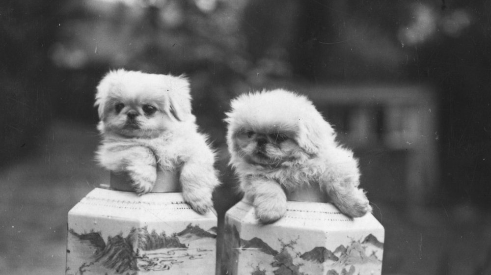 very small dogs