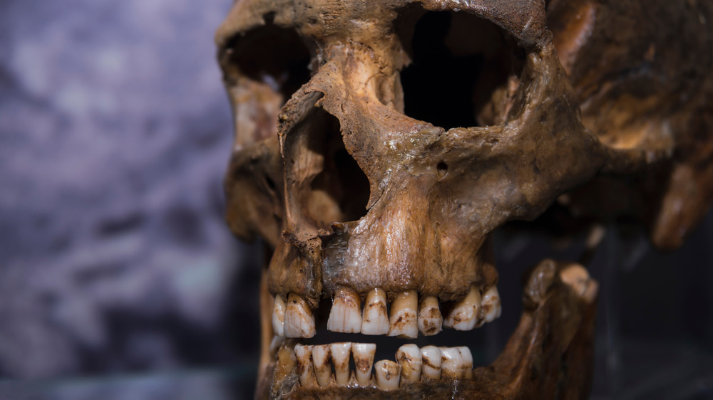 Neanderthal skull with teeth