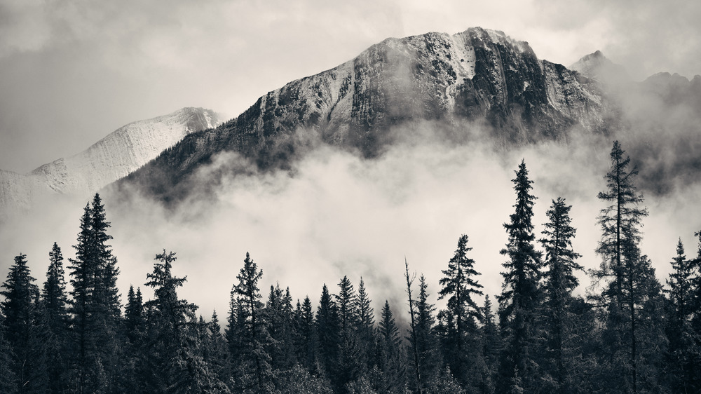 Mountains and Forest with fog