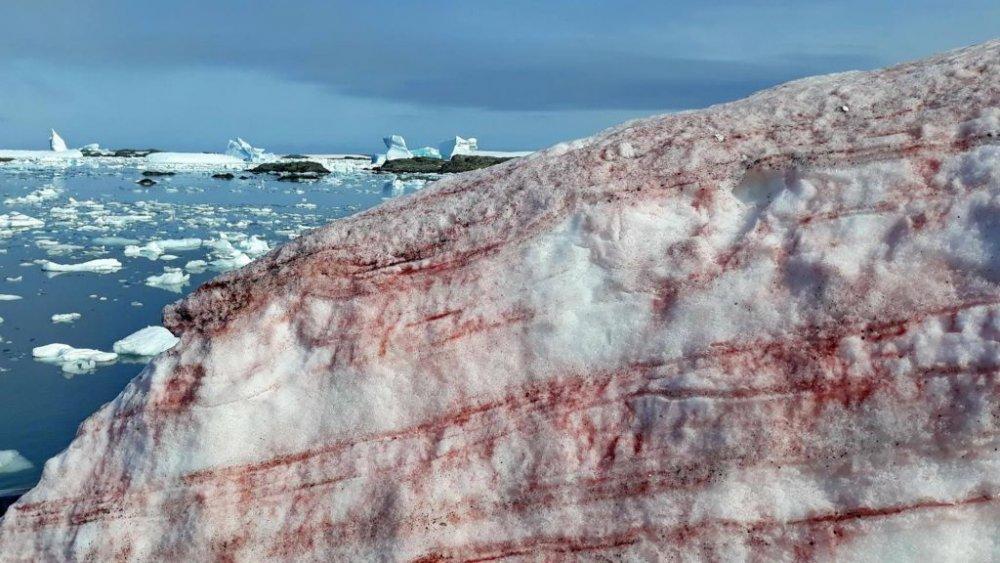 blood snow in Antarctica