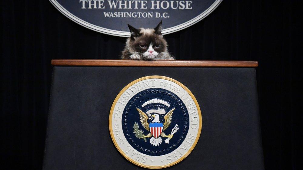 Grumpy Cat, white house podium