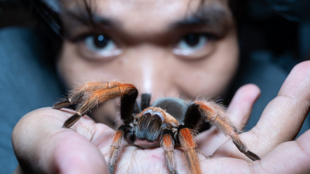 spider swallow human face