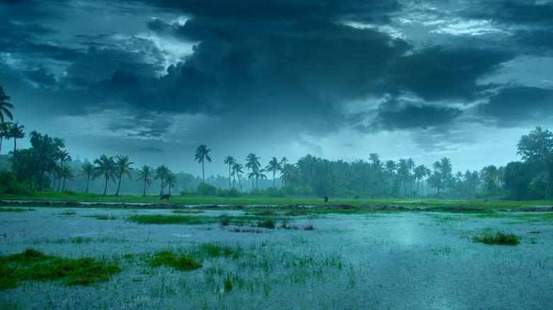 Kerala Monsoon rainfall