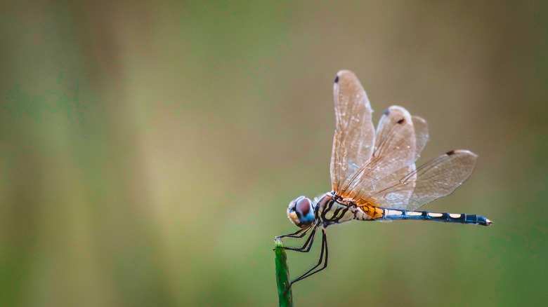 Close-up of dragonfly perched on branch