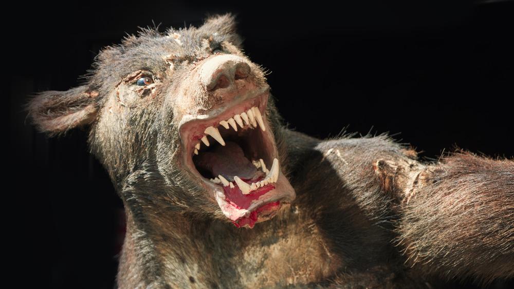 A werewolf growling