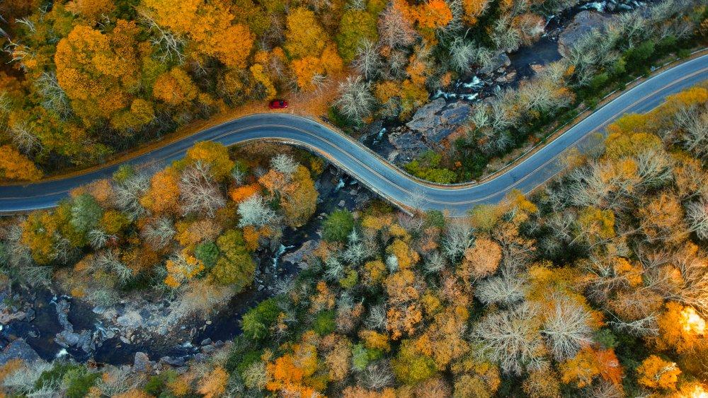 Road going through woods near Asheville, North Carolina