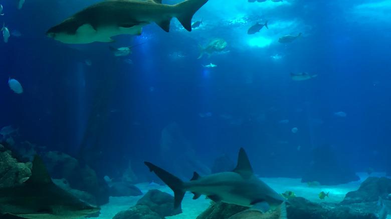 три светящиеся акулы