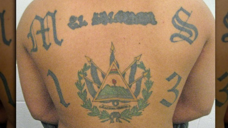 MS-13 member showing back tattoo