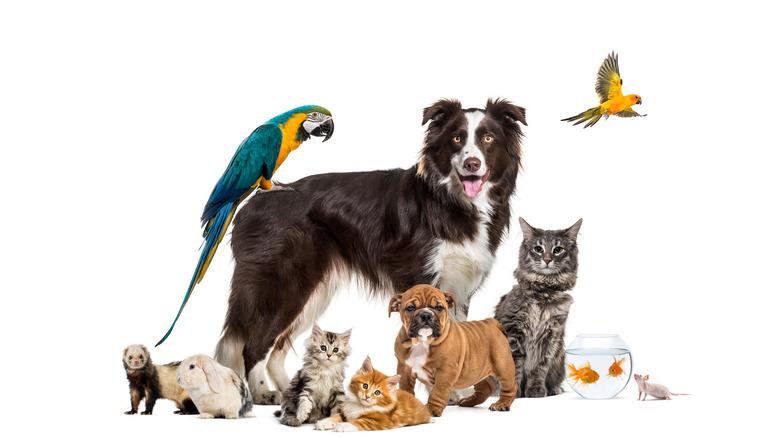 dogs, cats, parrot, birds, goldfish, pets