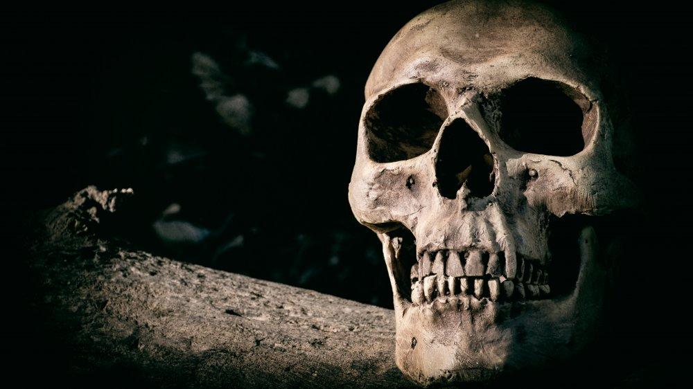 skulls! spooky!