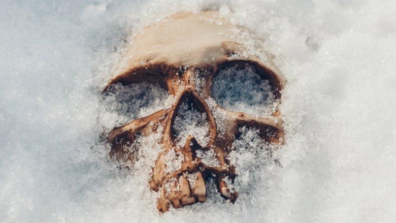 Skull in the snow