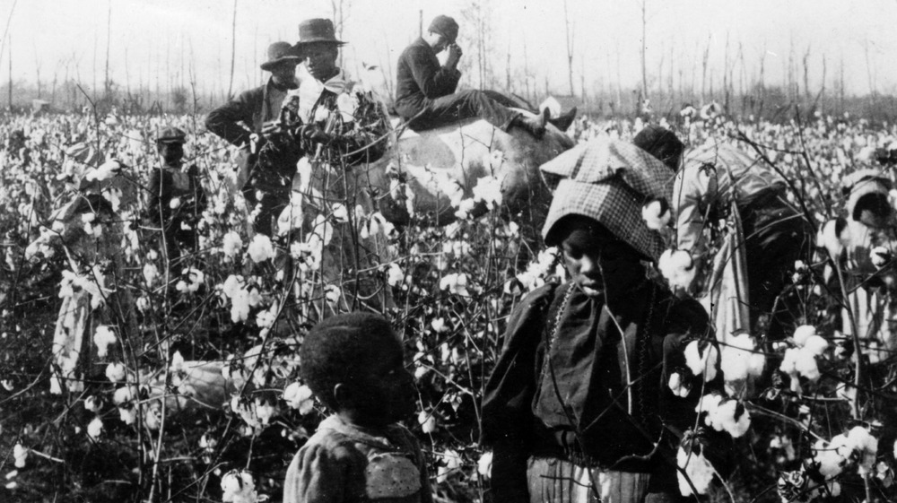 A family picks cotton in a field with their overseer resting on a horse