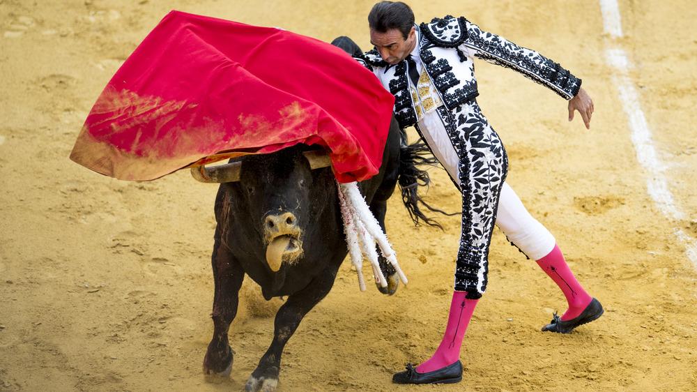 matador fighting bull, bullfighting match