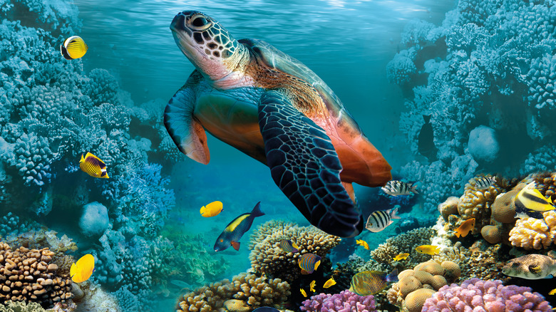 Turtle and fish swimming above coral reef
