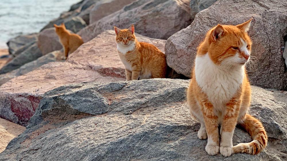 Tashirojima Island, Japan's Cat Island
