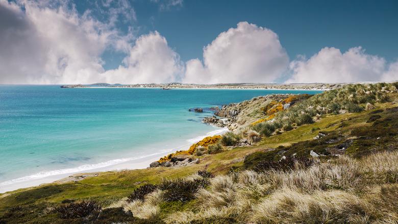 the shoreline of the falklands