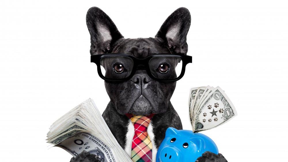 french bulldog w/money