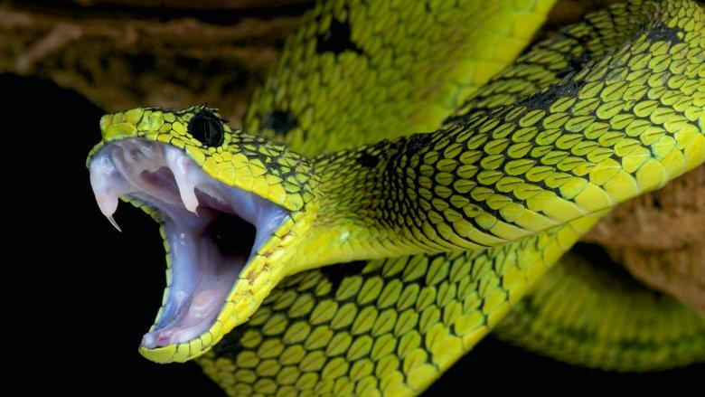 Snakes, serpents